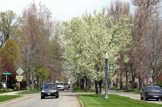 Harrison Blvd, North End, Boise