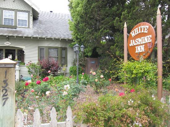 A White Jasmine Inn : Lovely garden in front of the bed & breakfast