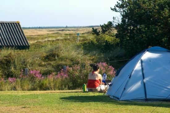 Henne Strand Camping : The Moor