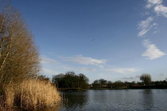 Victoria Park's artificial lake, is a haven for wildfowl...tufted duck etc