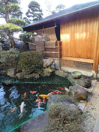 Gingetsu: 池に鯉が泳いでいます。