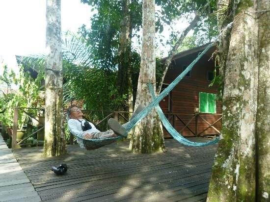 Abai Jungle Lodge: rest and bird at the same time