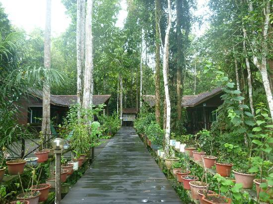 Abai Jungle Lodge: chalets