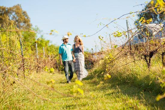 Spicers Vineyards Estate: 4 Stroll through our vineyard