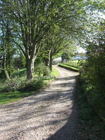 Colly Farm: The private driveway