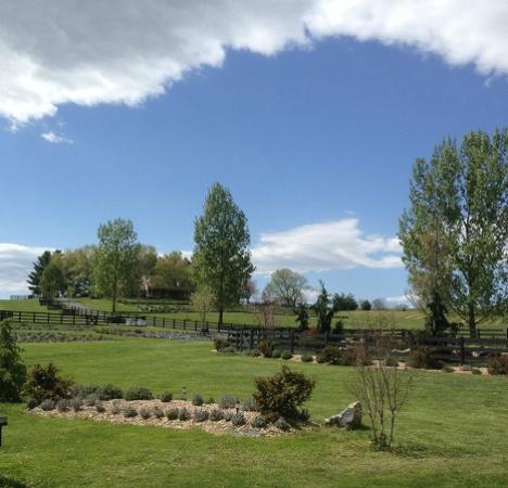 White Oak Lavender Farm: White Oak Farm
