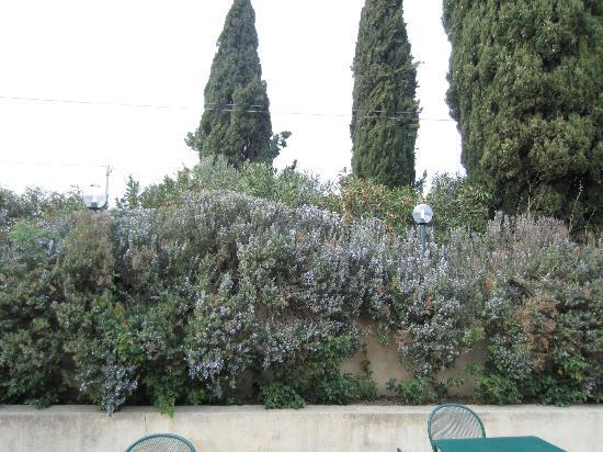 Agriturismo San Mattia: Gardens are gorgeous, lavender
