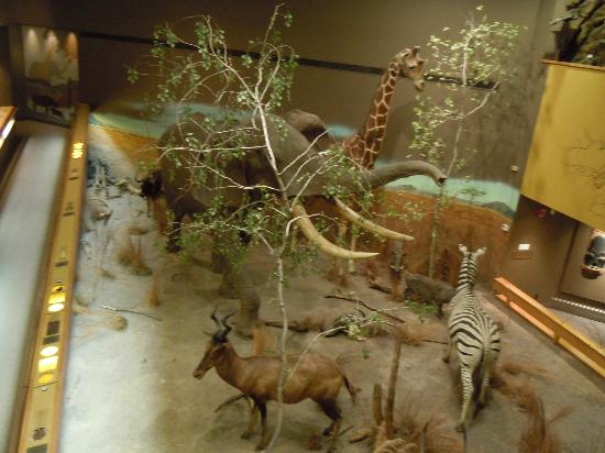 Springfield Museums: African Exhibit