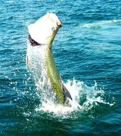 Fishing in the gulf picture of go fish charters fort for Fishing charter fort myers beach fl