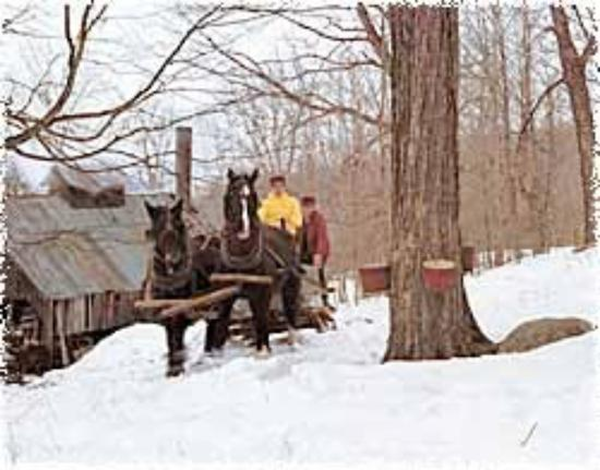 Maple Grove Farms of Vermont Aufnahme