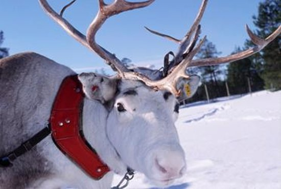 Canterbury Travel Lapland Day Trip Reviews