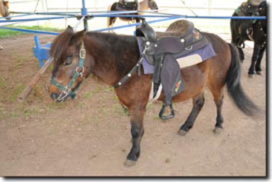 McGill & Sons Pony Rides Photo