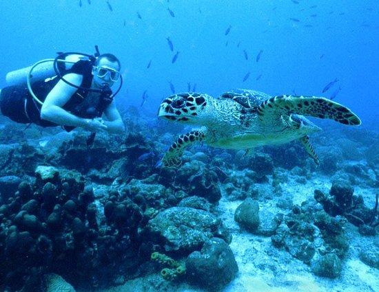 Dive Barbados Bridgetown Top Tips Before You Go