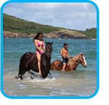 Foto de Holiday Riding Stable