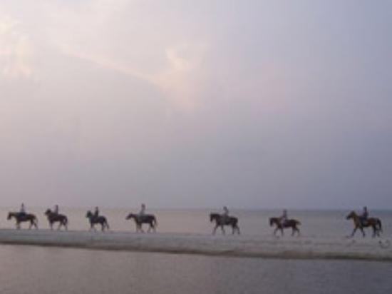 Outer Banks Riding Stables Resmi