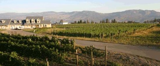 Kalala Organic Estate Winery : Kalala Organic Vineyard