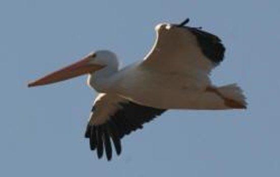 Audubon Kern River Preserve Photo