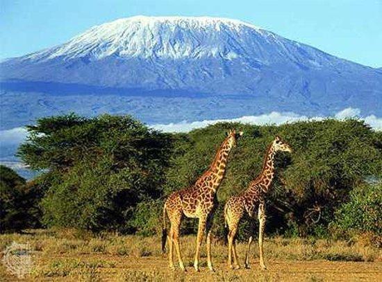 Pounds East Africa Safaris - Balloon Safari Aufnahme