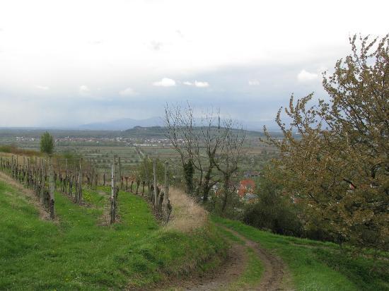 Adler: Blick vom Kaiserstuhl auf die Vogesen (unten der Ort)