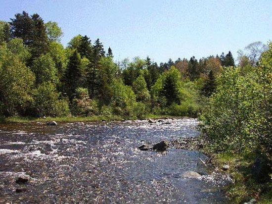Corner Brook Stream Trail All You Need To Know Before