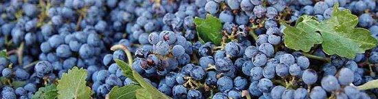 Chatom Winery Bild