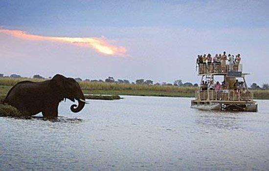 Chobe River Boat Cruises Kasane Botswana Address