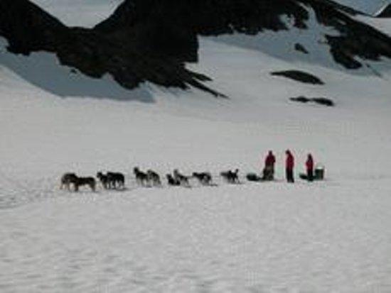 Chugach Express Dog Sled Tour