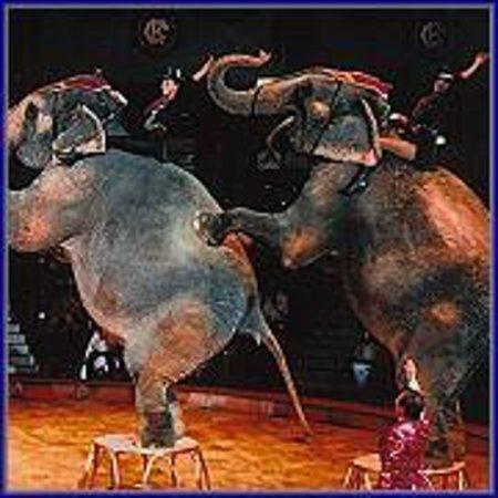 Circus Krone