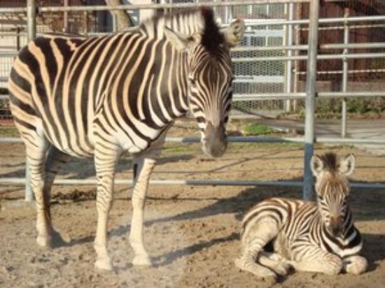 Kujukushima Zoological and Botanical Garden Morikirara Photo