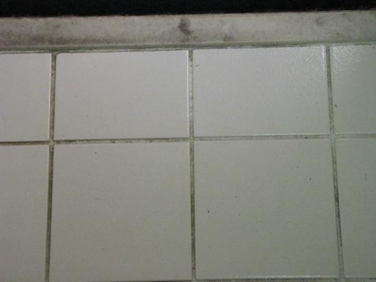 Baymont Inn & Suites Tallahassee: Bathroom floor grout