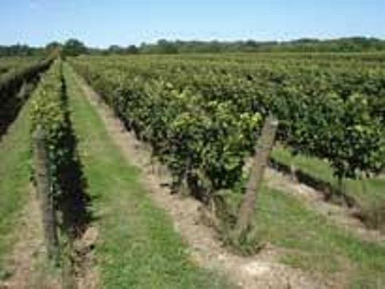Coastal Vineyards