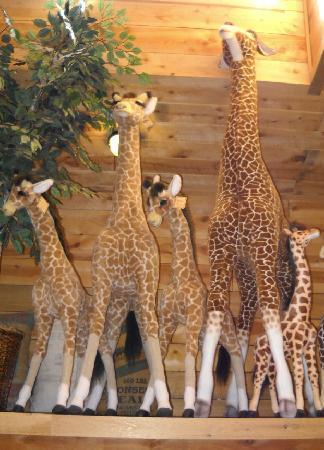 Life Size Giraffes on board ESTES ARK