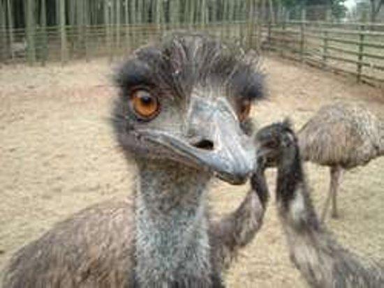 Ostrich Kingdom Ishioka Farm Foto