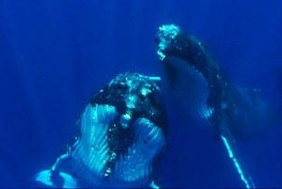 Deep blue diving nuku 39 alofa tonga top tips before you - Dive deep blue ...