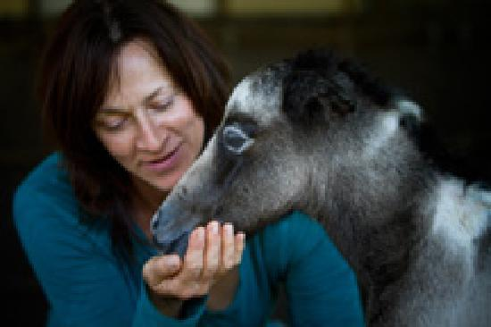 Return to Freedom, American Wild Horse Sanctuary : A Choctaw Foal and Equine Manager, Monica