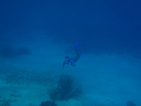 Posada La Movida: Snorkeling