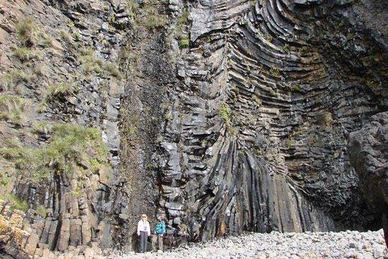 MacCulloch's Fossil Tree Foto