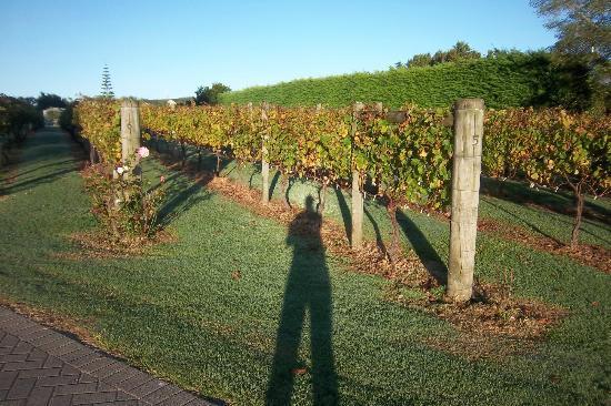 The Point Lodge : vineyard
