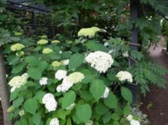 Floral Garden Obuse Photo