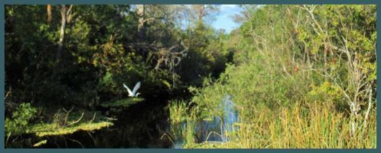 Museum of the Everglades: Beauty of the Everglades