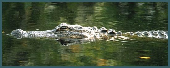 Museum of the Everglades : A local resident