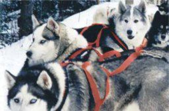 Forest Trail Dogsled Tours