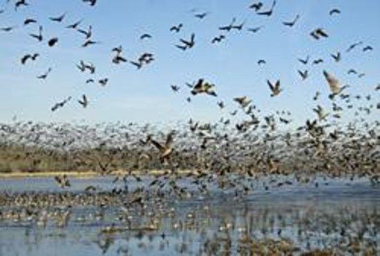 Audubon National Wildlife Refuge Complex Photo