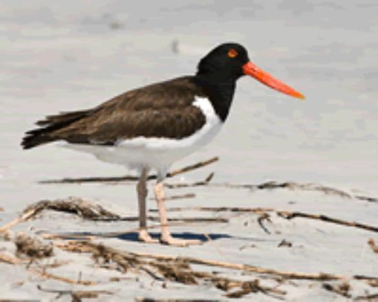 Blackbeard Island National Wildlife Refuge Foto