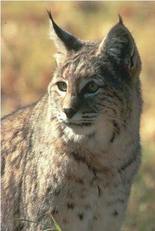 Ash Meadows National Wildlife Refuge Amargosa Valley Nv