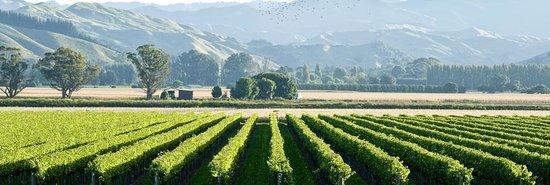 Zdjęcie Gisborne Wine Centre