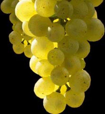 Gruet Winery