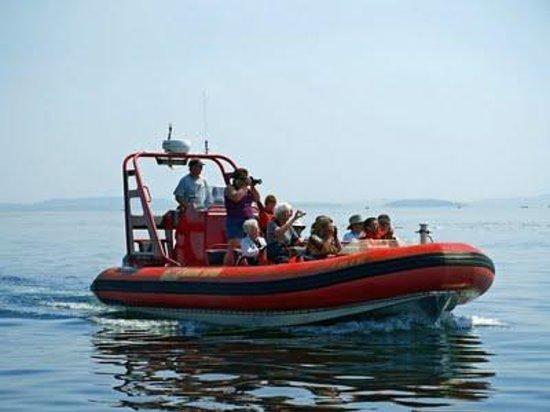 Gulf Island Safari: On scene!