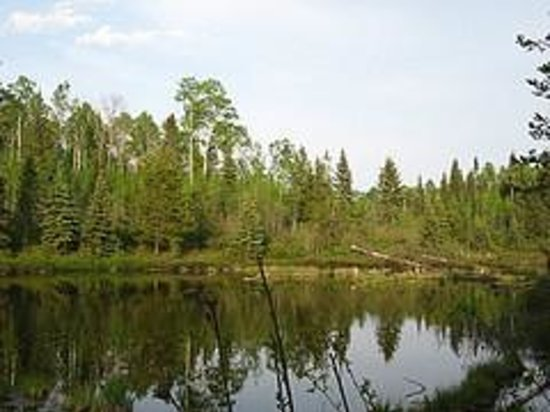 Foto de Goodsir Nature Park