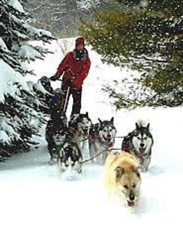 Husky Power Dogsledding